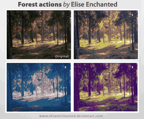 forest_actions