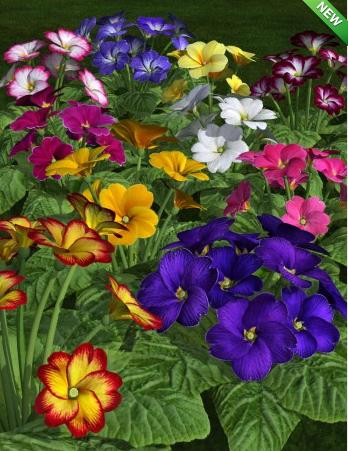 daz_3d_primroses_spring_has_sprung