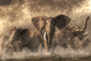 elephants_Daniel_Eskridge